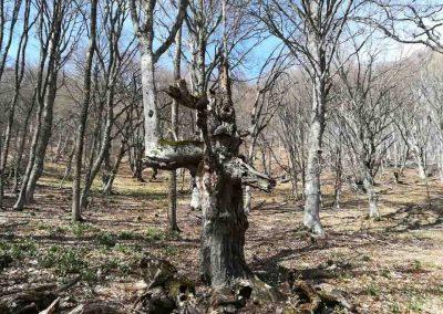 Буковый лес в Алуште