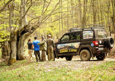 Буковый лес горного Крыма