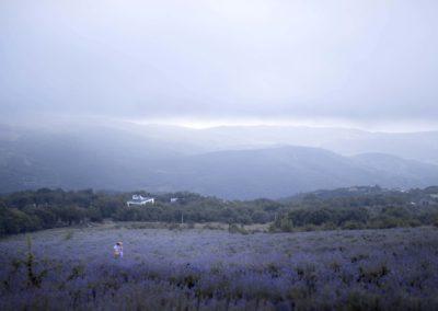 лавандовое поле - Алушта