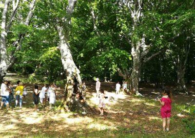 Буковый лес на Чатыр-даге