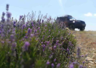 Фото туры на поля лаванды