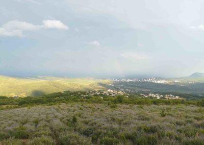 Вид на Алушту с лавандового поля