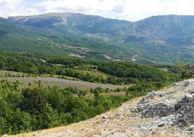 Горная лаванда в Крыму